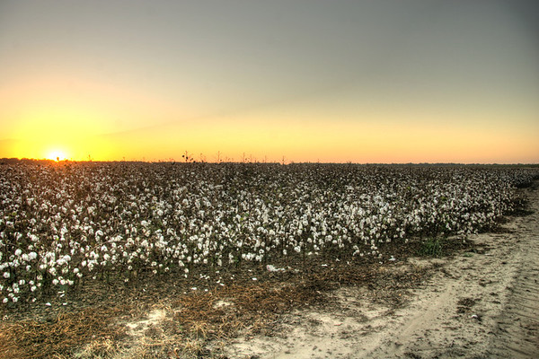 Cotton Trail. Clarksdale Mississippi