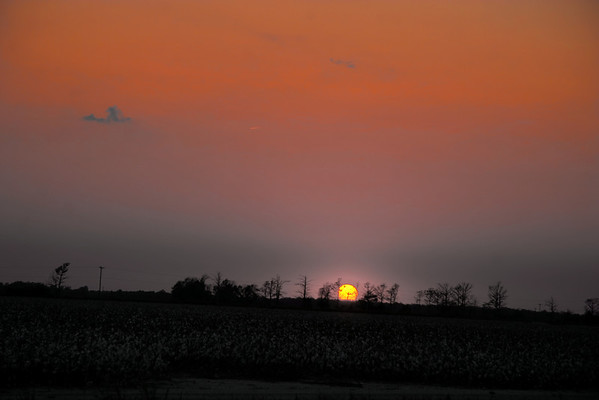 Sunset over the cotton fields.MS.