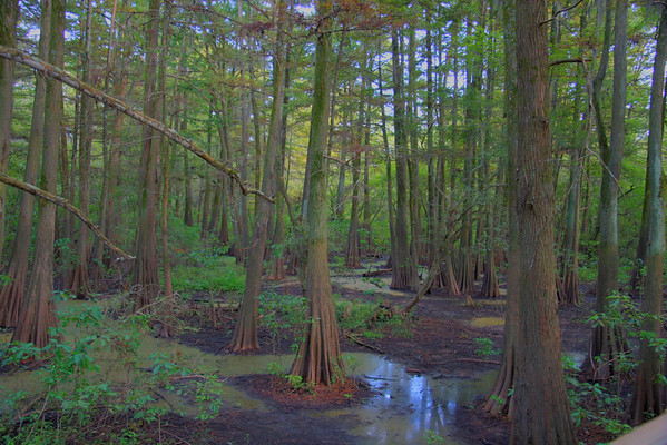 Sky lake - worlds largest Cypress trees. Very cool, and creepy all in the same location.