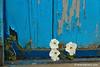 Puerta con flores en Letea (Rumanía)