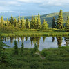 Camp Denali reflection pond, Danali is in hiding.