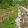 Fireweed and tracks North.
