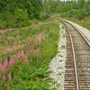 Fireweed and tracks North.