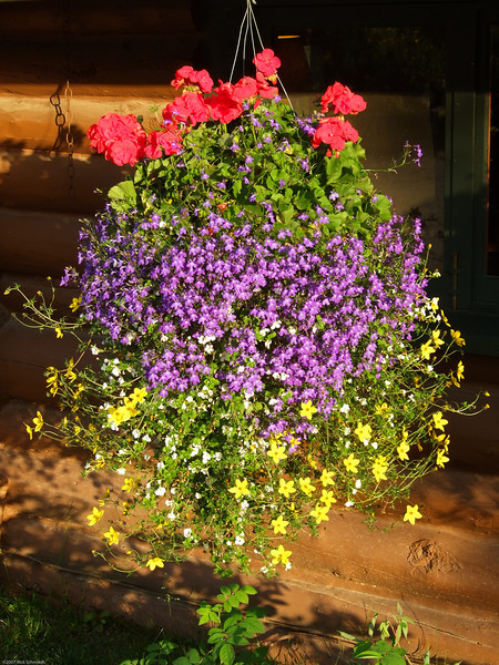 Camp Denali flower basket