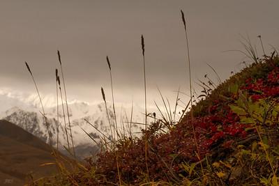 Tundra Grass & Stormy Skies