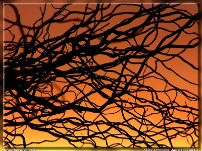 Branches at sunset-784_filtered