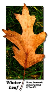 Winter Leaf 2