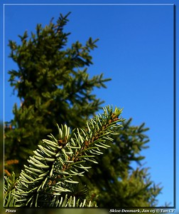 Pines-398_filtered