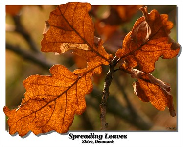 Spreading Leaves