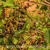 Berries in Red Rocks Park
