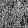 Grass Seedheads at Red Rocks Park