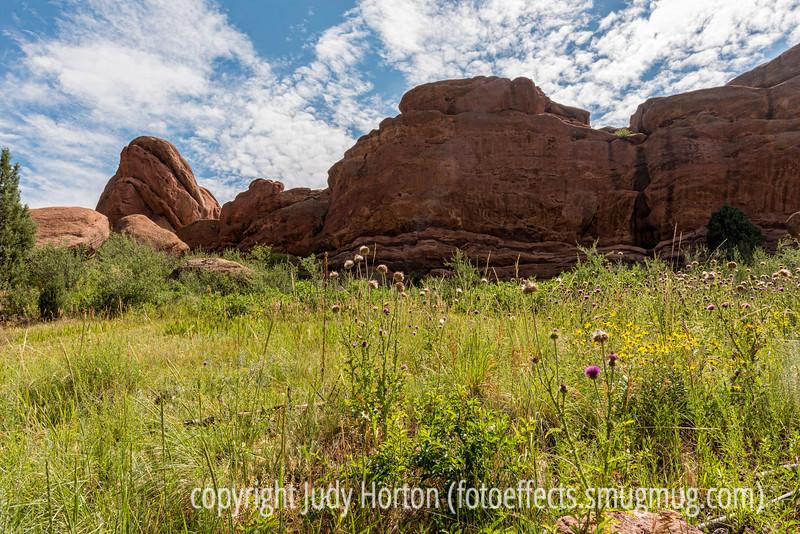 Wildflowers in Red Rocks Park