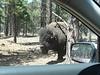 Williams Drive Through Animal Park
