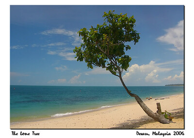 lone tree_filtered