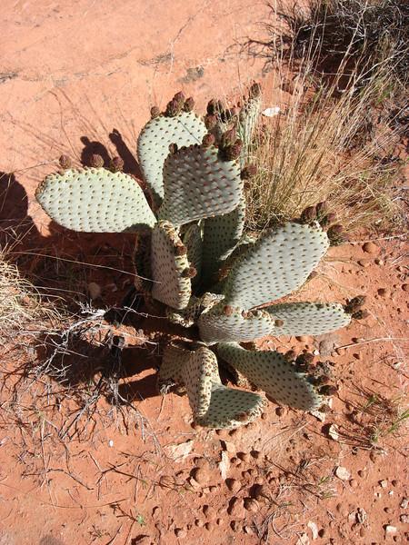 cactus, again.