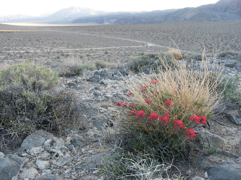 View from atop a hill overlooking The Racetrack area of Death Valley, taken after a night of rustic camping in this beautiful remote location. Spring desert flowers caught my attention.