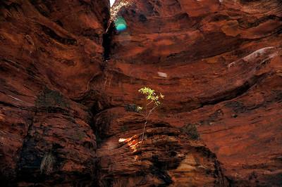 Kings Canyon, Garden of Eden