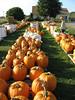 pumpkins_20070922_46