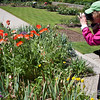 Photographing Castle Drago gardens, Dartmoor National Park, Devon, England, U.K.