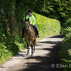 Horse and rider near Exford, Exmoor National Park, Somerset. England, U.K.