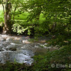 The River Barle near Rackenford, north Devon, England, U.K.