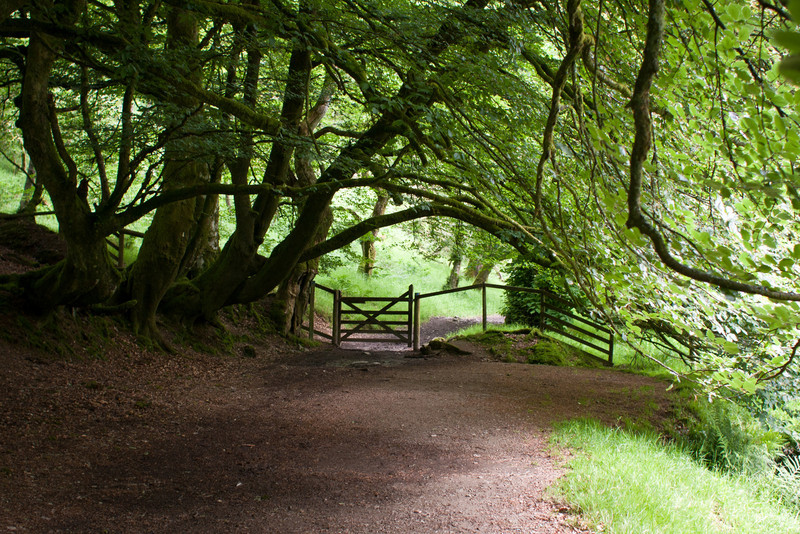 Farm gate and ancient woodland,  Exmoor National Park, North Devon. England, U.K.
