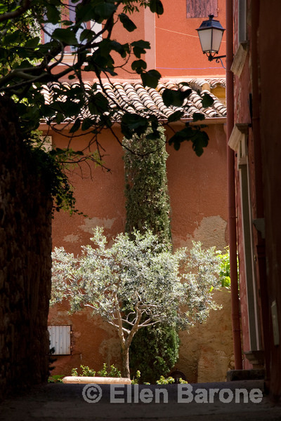 Garden olive in the beautiful multi-hued village of Roussillon, the Luberon, Provence, France, Europe.