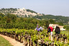 Wayfarers walkers in vineyard near Lacoste,  the Luberon, Provence, France, Europe