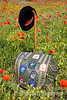 Wayfarers backpack in a field of poppies near Gordes, the Luberon, Provence, France, Europe