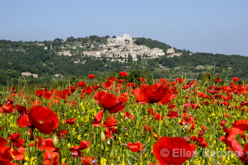 Poppies and vineyards with the pretty hilltop village of Lacoste in the distance, the Luberon, Provence, France, Europe