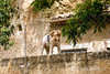 Nearly every Provençal house boasts a friendly dog, Provence, France, Europe