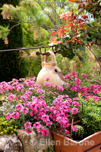 Flowers and pot, Provence, France, Europe