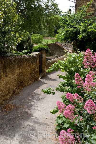 Flower strew stone walls, the cornerstone of Provençal village streets, Vaugines,Provence, France, Europe
