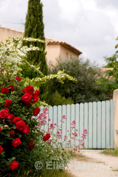 Charming vingette, roses and gateway, Provence, France, Europe