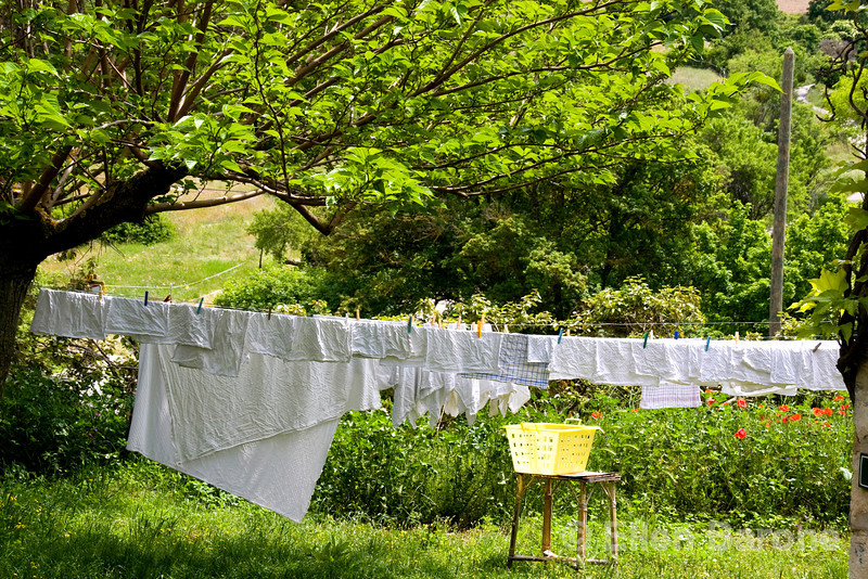 Laundry dries in a lush garden in Buoux, the Luberon, Provence, France, Europe.