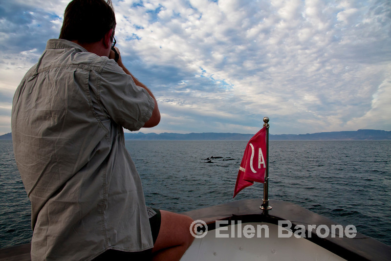 Photographing pilot whales, Safari Quest, Sea of Cortez, Baja California, Mexico.