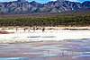 Safari Quest passengers explore Punta Salinas salt flats, Sea of Cortez, Baja California, Mexico.