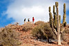 Hiking among the giant cardon cacti, Sea of Cortez, Baja California, Mexico.
