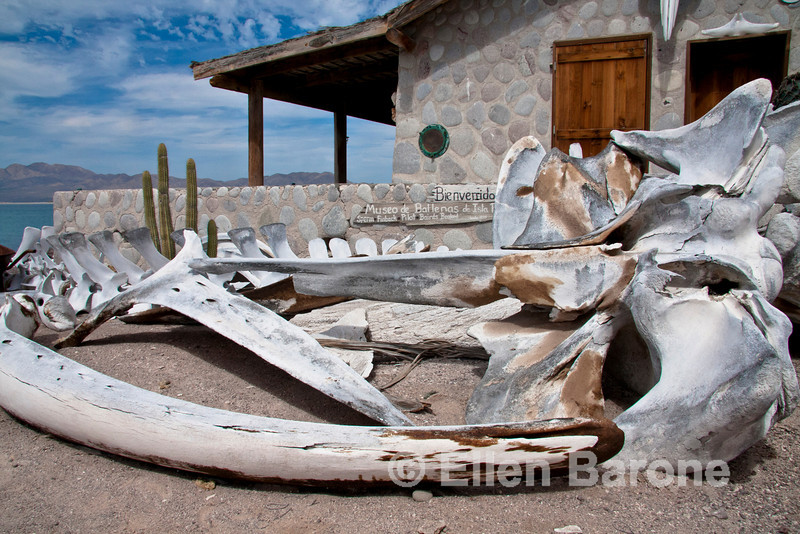 Private whale museum, Isla Coyote (Pardito), a small fishing island in the Sea of Cortez, Baja California, Mexico.
