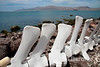 Whale bones create a lovely picket fence on Isla Coyote (Pardito), a small fishing island in the Sea of Cortez, Baja California, Mexico.