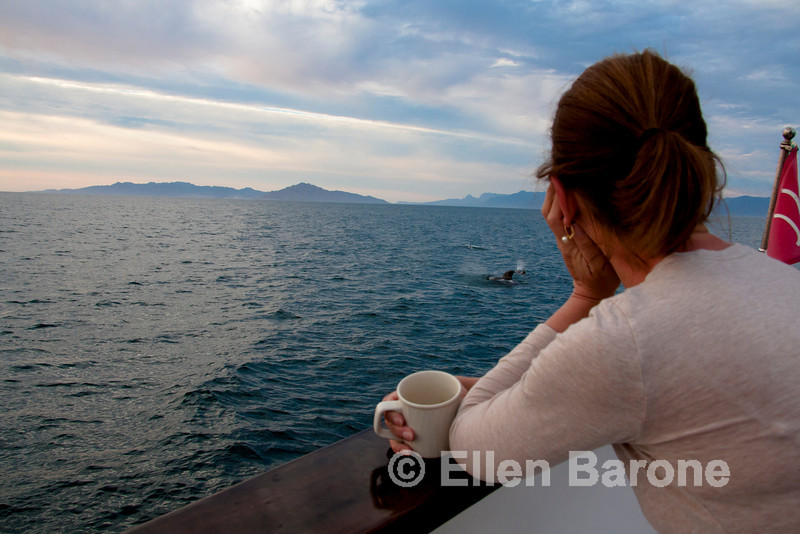 Safari Quest, pilot whales, Sea of Cortez, Baja California, Mexico.