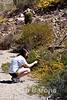 Safari Quest passenger Hadley Chu photographing desert plants at Isla Danzante, Sea of Cortez, Baja California, Mexico.
