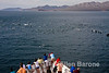 A huge pod of common dolphins approach Safari Quest, Sea of Cortez, Baja California, Mexico.