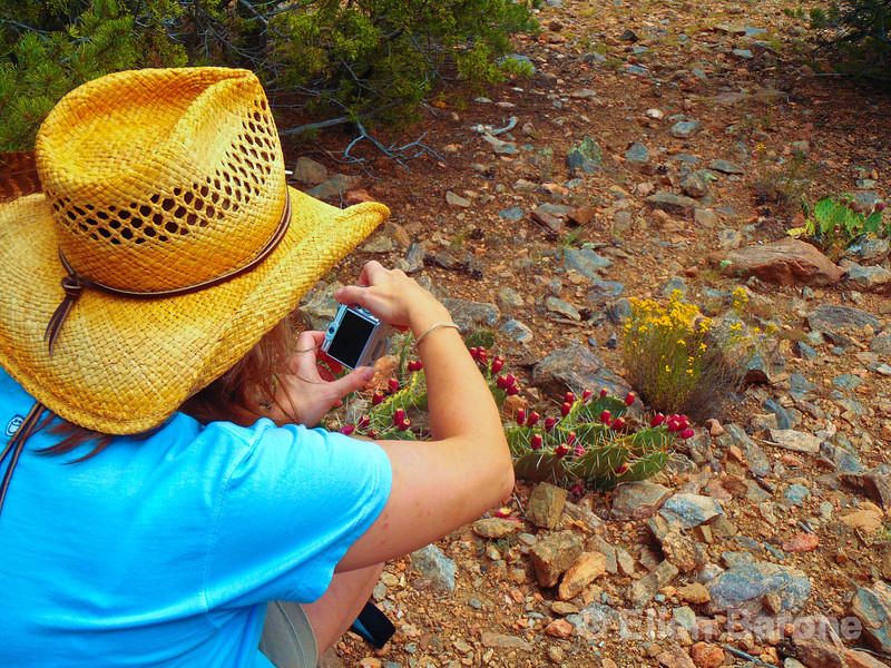 Photographing prickley pear cactus, Santa Fe, New Mexico.