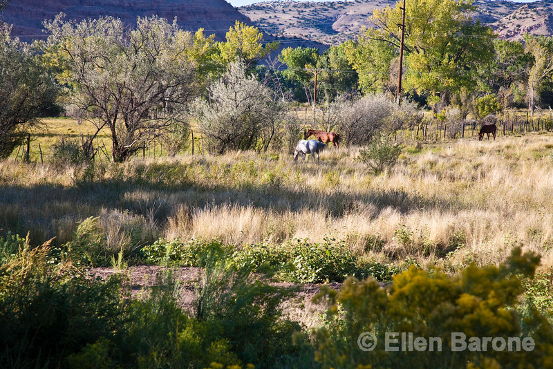 Horses in pasture, rural scenic, Abiquiu, New Mexico.