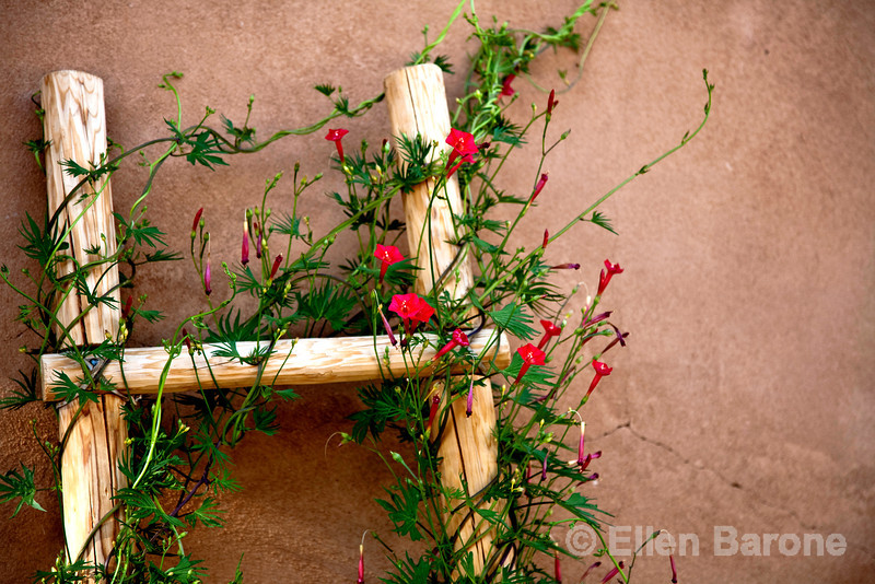 flowers and wood ladder, Abiquiu Inn, Abiquiu, New Mexico.
