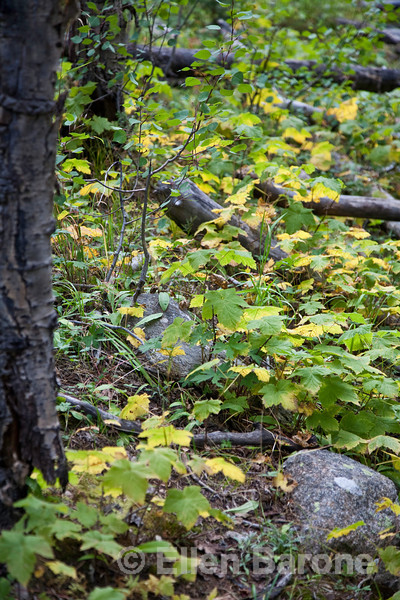 Autumn, fall colors, forest detail, Santa Fe, New Mexico
