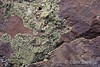 lichen on rock, Falls trail, Bandelier National Monument, Jemez Mountains, New Mexico.