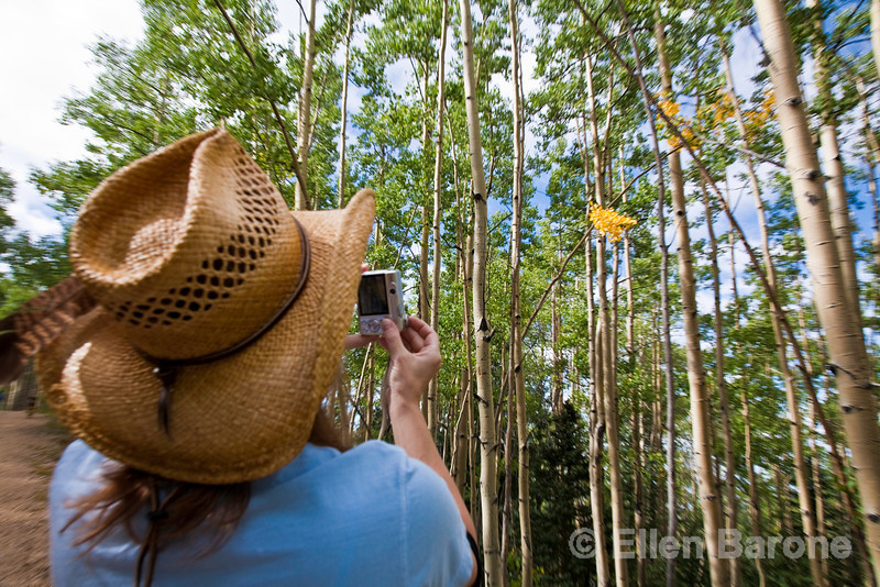 Photographing the first signs of autumn, fall colors, Santa Fe, New Mexico