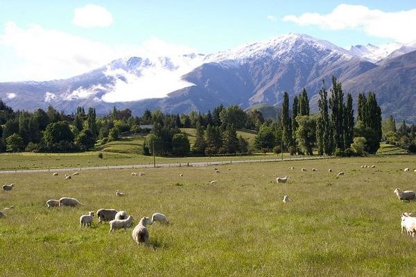 sheep farm scenic, Queenstown environs, South Island, New Zealand